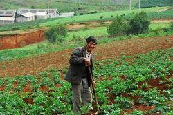 Украине стоит опасаться нашествия из Китая - эксперт аграрного сектора