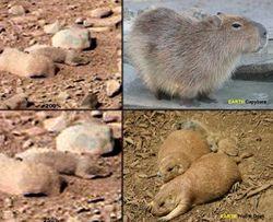 Пользователи Интернета разглядели на снимках с Марса земных зверей