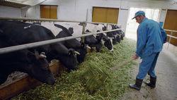 Субсидирование аграриев России может быть увеличено в разы