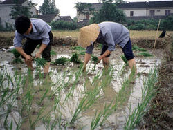 В Китае уравняют пенсии жителей городов и сел
