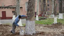 Чиновник министерства о принудительном труде в Узбекистане