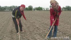 Медицинских работников в Узбекистане снова погнали на прополку