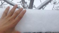 Из-за неожиданных морозов в Узбекистане пострадали плодовые деревья