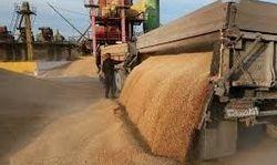 В 2013 году урожай зерна будет хорошим – реакция бирж