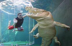Туристам: в Австралии крокодилы намного опаснее акул