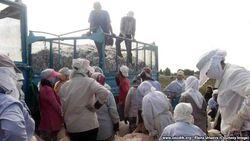 Преподаватели ВУЗов, учителя и воспитатели Узбекистана снова отмечают День учителя в поле