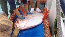 Ученые обнаружили теплокровную рыбу
