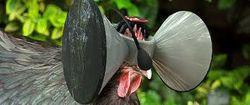 Создан проект виртуального шлема для кур