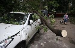 МЧС РФ подсчитало ущерб от урагана в Москве