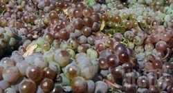 ЕК предоставит 125 млн. евро аграриям, попавшим под эмбарго России