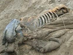 Останки мамонта впервые найдены на территории Узбекистана
