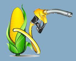 Массовый переход на биотопливо грозит человечеству голодом – исследование