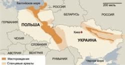 Залежи сланцевого газа в Украине