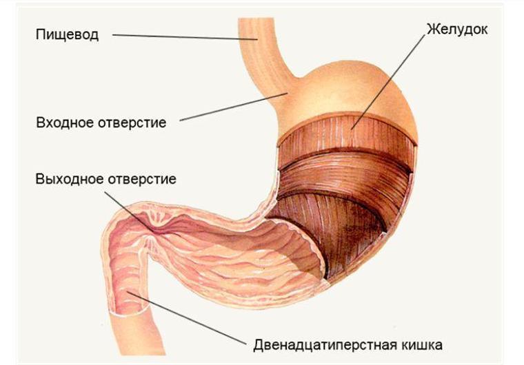 Таблетка - Язва желудка - Первый канал