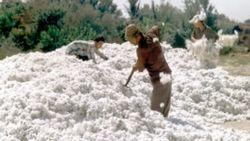 70 процентов хлопка Узбекистан переработает сам