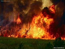В 4 раза за сутки выросла площадь лесных пожаров в Сибири