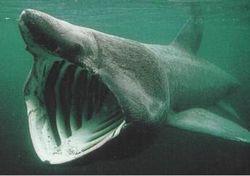 Ученые открыли новый вид акул, которые могут ходить