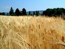 В Армению прибудет мониторинговая миссия FAO