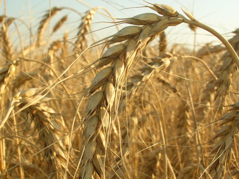 Форекс пшеница ооо втб 24 форекс официальный сайт