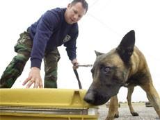 Из-за ошибки служебной собаки эвакуировали Казанский вокзал