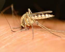 Вакцина от малярии успешно прошла первые испытания – отчет