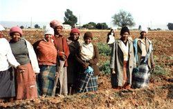 Фермеры из ЮАР