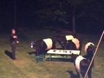 Коровы ворвались на вечеринку