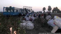 Еще одна жертва хлопкового сезона в Узбекистане