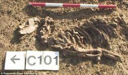Первые собаки появились не в Азии, а в Европе 18 тысяч лет назад – ученые