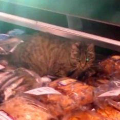 В магазине Владивостока кот полакомился деликатесами на 60 тысяч рублей