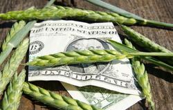 Аномальные дожди угрожают урожаю зерновых в Украине в 2013 и 2014 годах