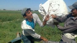 В Узбекистане трактор переехал парня на хлопке