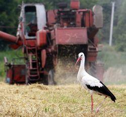 ЕБРР проведет инвестиционную программу для аграриев Украины