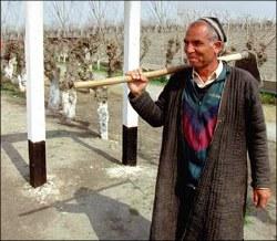 В Узбекистане фермеры молчат, даже когда их избивают – СМИ