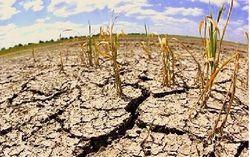 Северной Корее угрожает самая сильная в XXI веке засуха