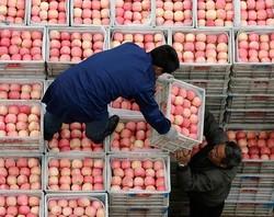 Китайские яблоки не заменят России польские – СМИ