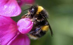 Инвесторам: Реальный вред от пестицидов сильно недооценен – ученые