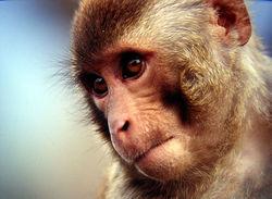 От кремлевских санкций страдают даже звери в российских зоопарках