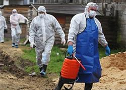 В Беларуси врут об африканской чуме свиней – российский эксперт