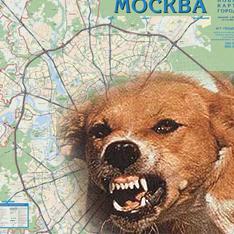 В одном из округов Москвы на 2 месяца введен карантин