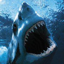 акула-людоедка