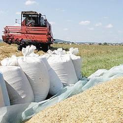 Отчет Министерства сельского хозяйства США может изменить цены на украинское зерно