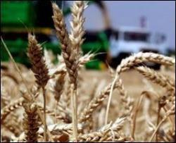 Аграрии Украины недовольны собранным урожаем