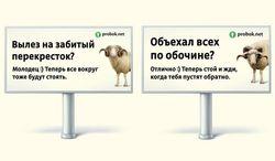 """В России нерадивых водителей приравняли к """"баранам"""" - причины"""