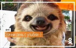 """Админы """"Одноклассников"""" представили смешную подборку фото к приближающимся выходным"""