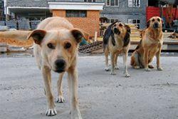 В Украине введут реестр домашних животных с адресами их владельцев
