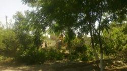 В Узбекистане на месте старого сада с редкими деревьями строится рынок