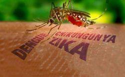 Вирус Зика сравнили с пандемией СПИДа