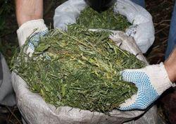 Лекарства с марихуаной разрешили давать детям в Нью-Джерси