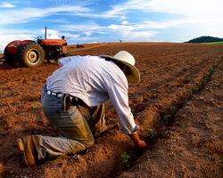 Германия, Франция и США помогут Украине с развитием аграрного сектора